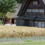 Rice plant and Nakano Chojiro House