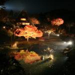 Lighting up Autumn foliage