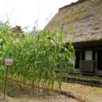 Yamashita Harurou House and Sorghum (Takakibi)