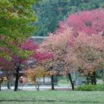 Nakano Chojiro House in Autumn